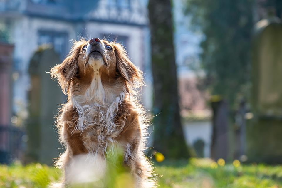 Dog, Attention, Mixed Breed Dog, Domestic Dog, Pet