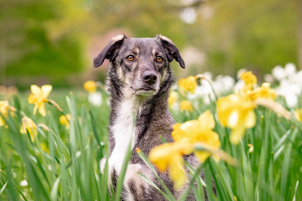 Hybrid, Dog, Pet, Animal, Mixed Breed Dog, Attention