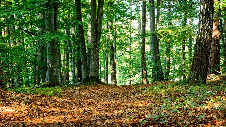 Forest, Mixed Forest, Autumn, Rest, Silent, Nature