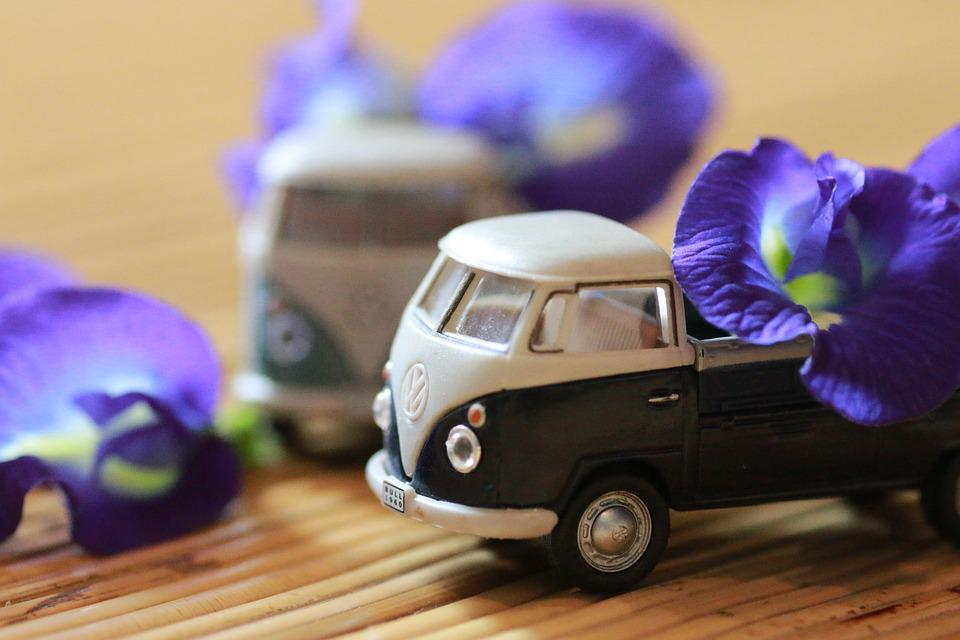 Model Car, Flower, Indoor, Volkswagen, Toy