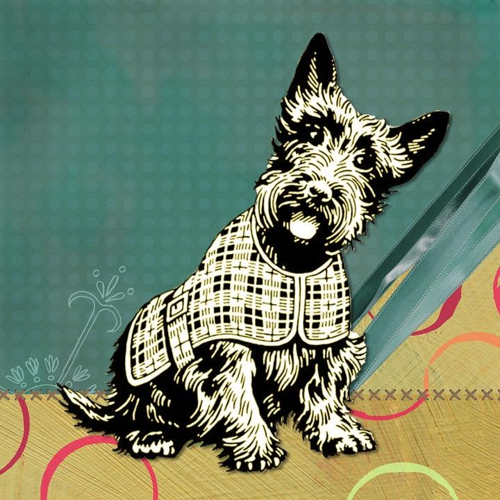 Scottish, Dog, Modern, Teal, Circle Design, Funny
