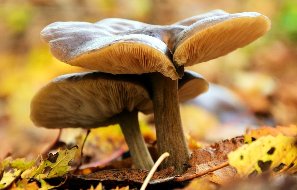 Mushrooms, Autumn, Forest, Nature, Moist