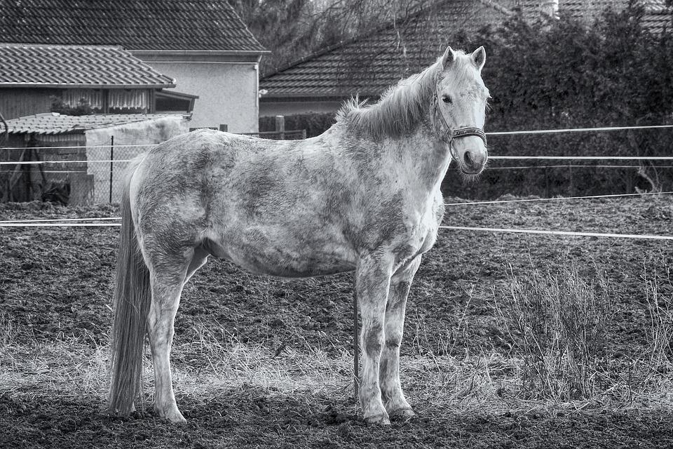 Horse, Mold, Mammal, Animal, Farm