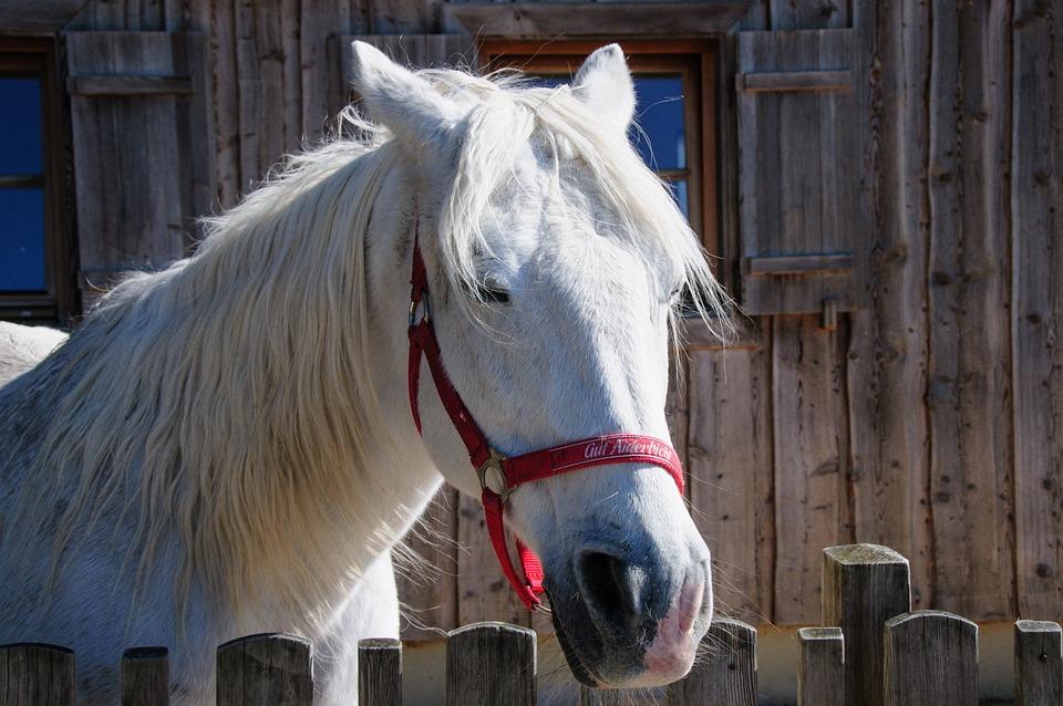 Horse, Stall, Sanctuary, Mold, Animal, Mane