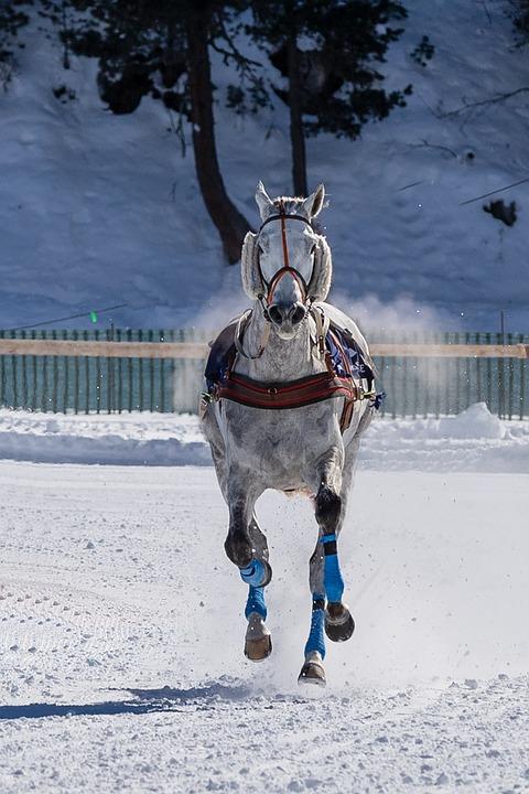 Mold, Horse, Gallop, Race, Snow, Nature, Sport, Mammal