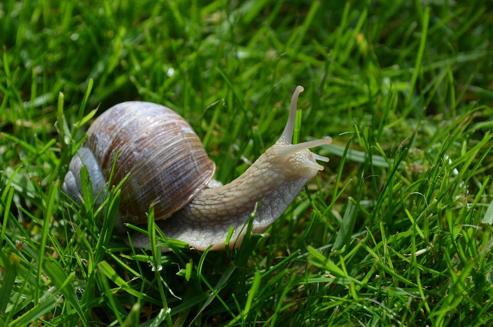 Snail, Schnecknehaus, Mollusk