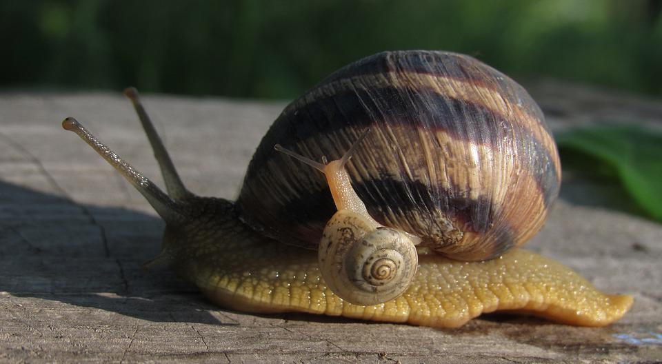 Snails, Macro, Mom, Nature, Slimy, Creeps, Animals