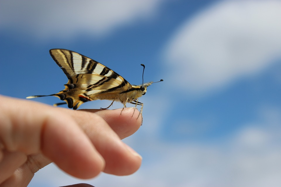 Butterfly, Ourem, Portugal, Golden, Moment, Sky, Macro