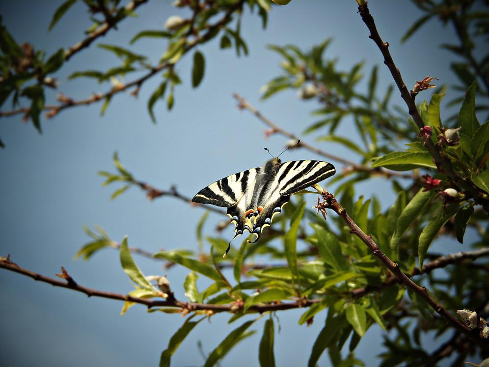 Monarch Butterfly, Butterfly Wings, Sky, Branch, Tree