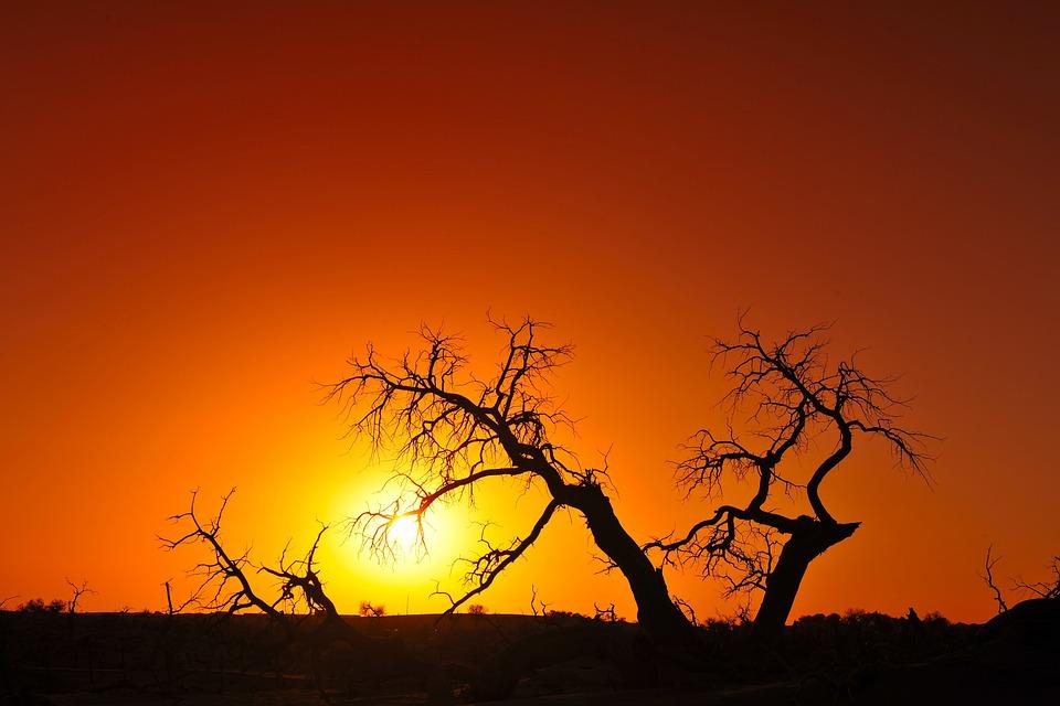 Inside, Mongolia, Strange Tree, Sunset, Silhouette