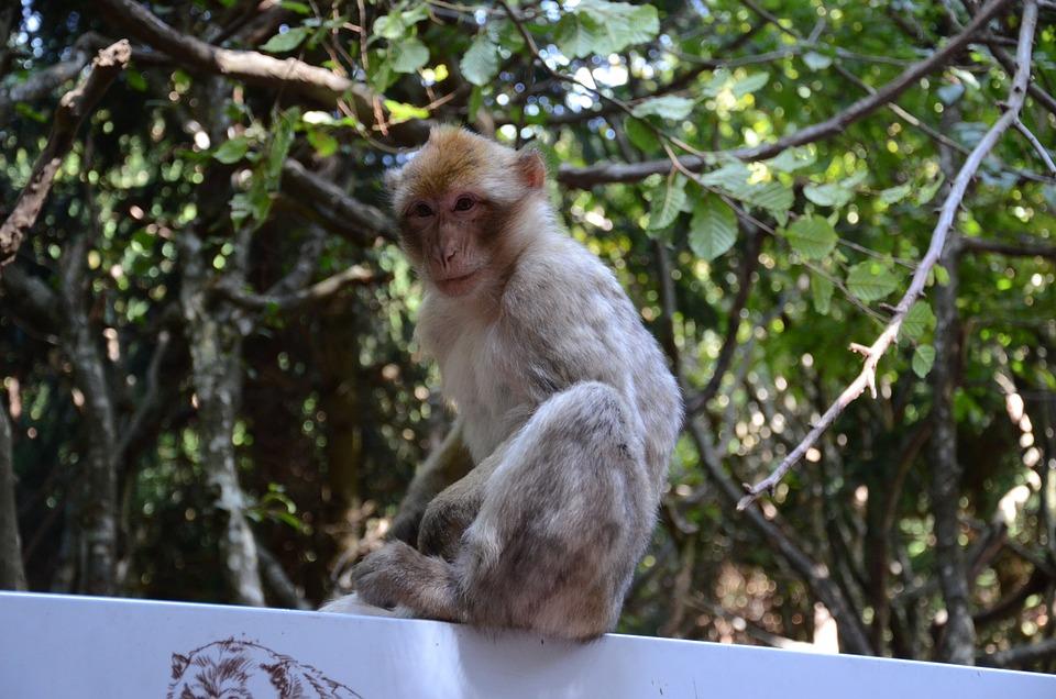Monkey, Face, Zoo, Primate, Animal, Mammal