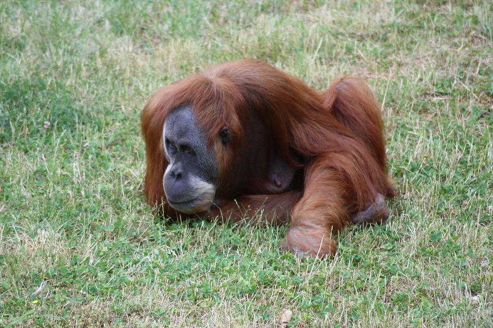 Monkey, Zoo, Animal, Primate, Wildlife Photography
