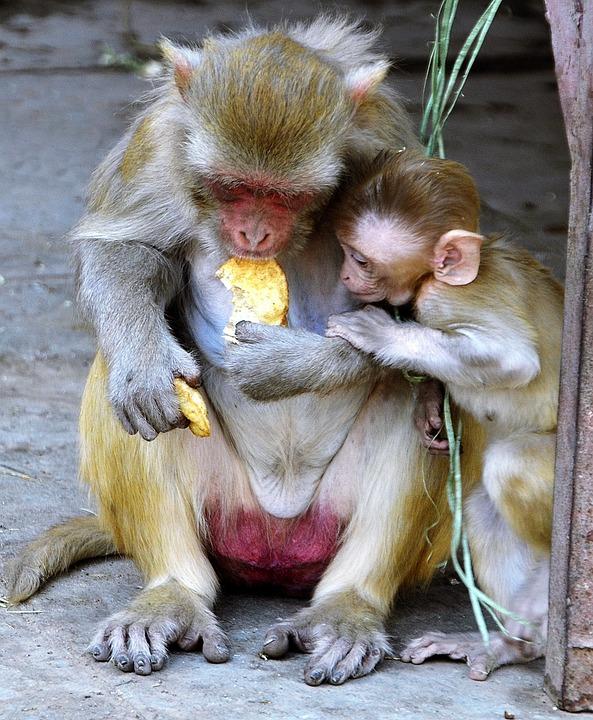 Monkey, Baby, Mother, Female, Family, Eating, Sharing