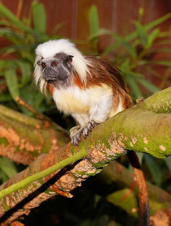 Monkey, Enclosure, äffchen, Nature, Animal World, Zoo