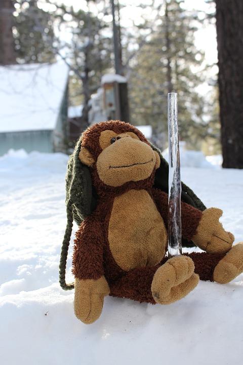Stuffed Animal, Monkey, Snow