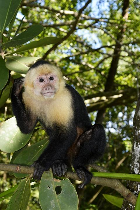 Mono, Monkey, Animal, Primate, Natural, Habitat