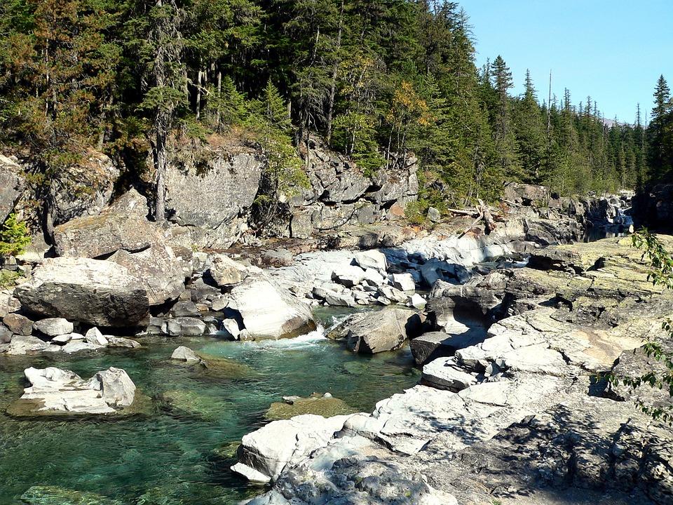 Montana, Stream, Tree, Spring, America, Nature, Forest