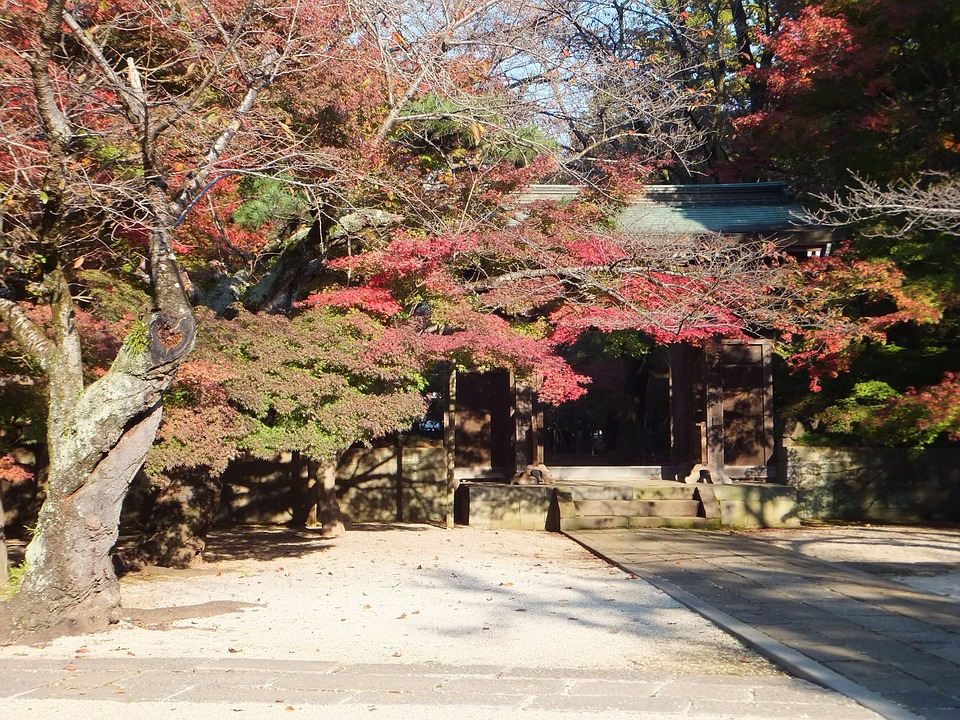 Views, Autumnal Leaves, Garden, Wood, Monument, Temple