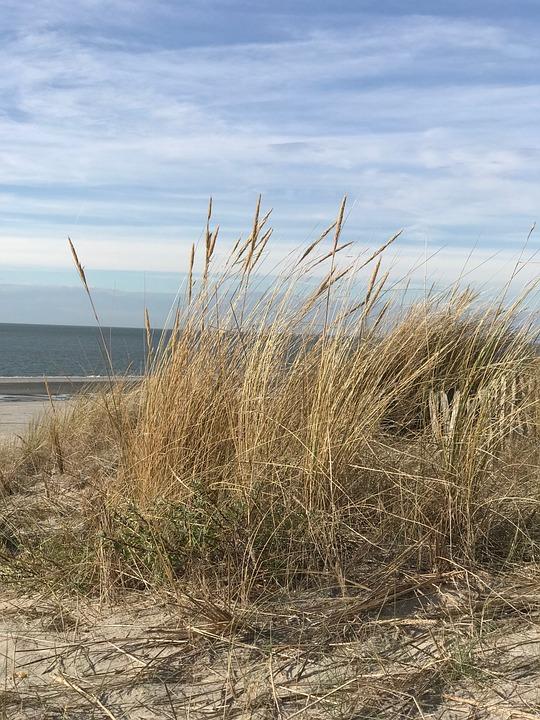 Beach, Dune, Sea, North Sea, Holland, Holidays, Mood
