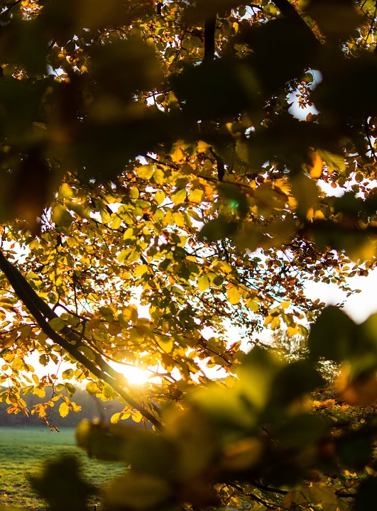 Autumn, Sun, Leaves, Mood, Back Light, Fall Leaves