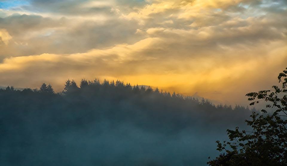 Fog, Sunset, Forest, Sky, Mood, Sun, Evening, Nature