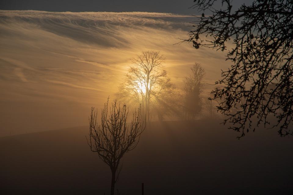 Light, Fog, Nature, Autumn, Mood, Atmosphere, Morning
