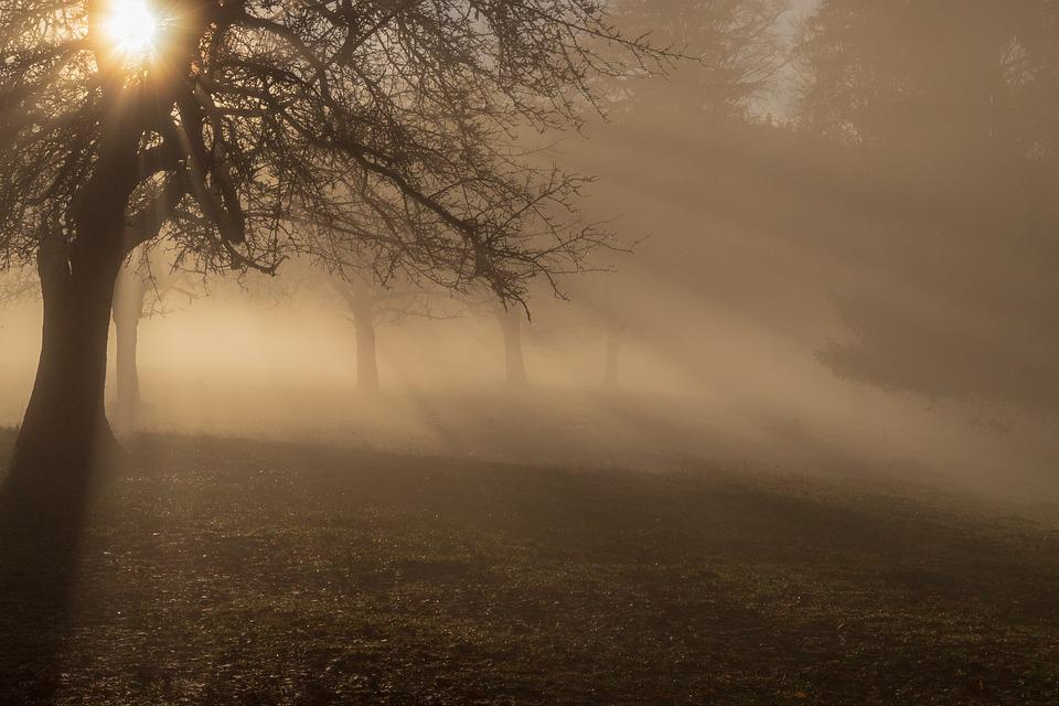 Fog, Ray Of Light, Mood, Sun, Mystical, Trees