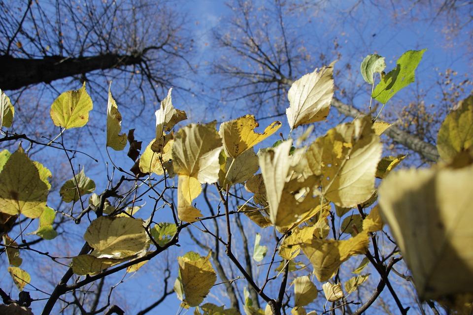 Autumn, Leaves, Trees, Sheet, Foliage, Mood, Landscape