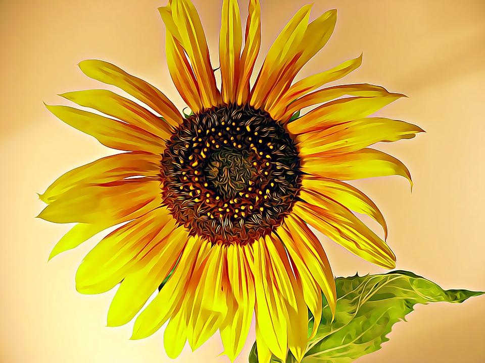 Sunflower, Summer, Mood, Yellow, Plant, Petal, Foliage