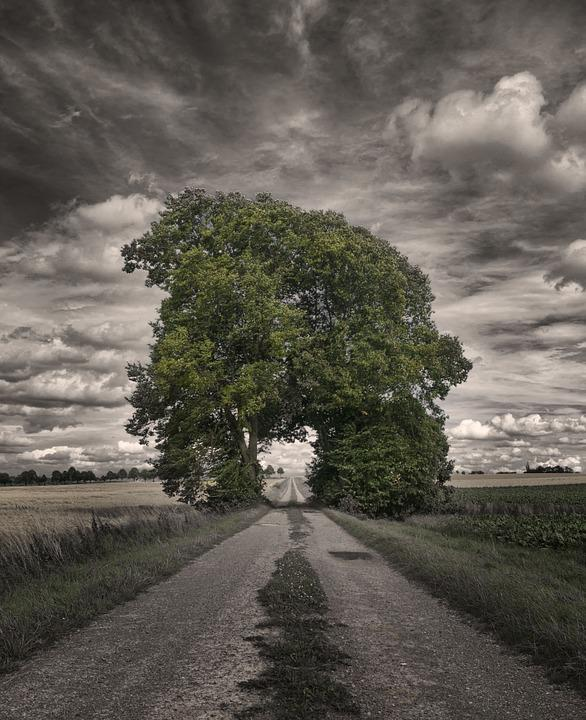 Grove Of Trees, Away, Mood, Landscape, Dramatic