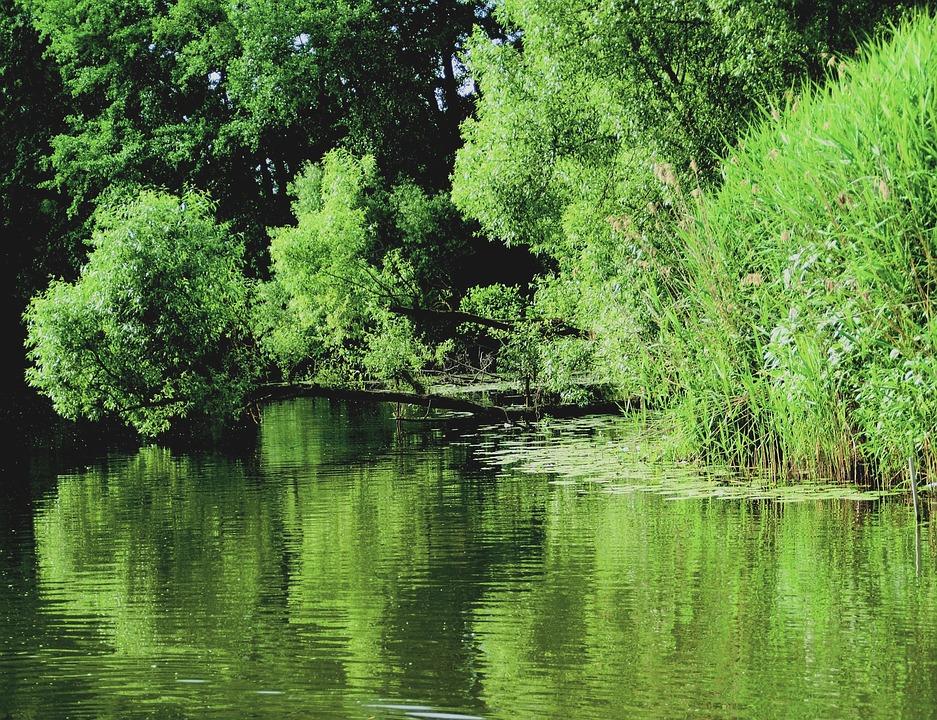 Lake, Light, Reflex, Shadow, Mood, Rest, Trees, Shrubs