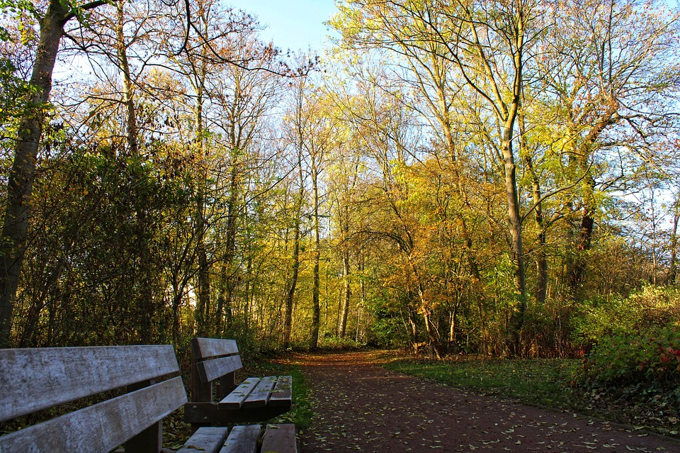 Leaves, Bench, Autumnn, Mood, Fall Colors, Fall Foliage