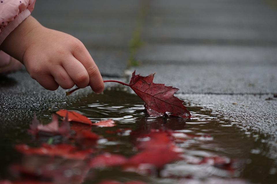 Autumn, Hand, Leaves, Red, Puddle, Leaf, Nature, Mood