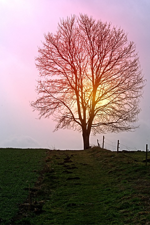 Tree, Individually, Away, Sun, Sunset, Mood, Light