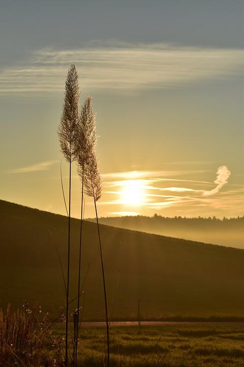 Sunrise, Morning, Fog, Mood, Sun, Morgenstimmung, Light