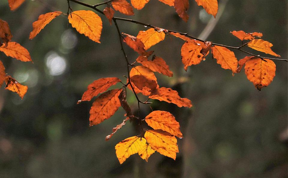 Leaves, Autumn, Forest, Nature, Mood, Drip, Tree