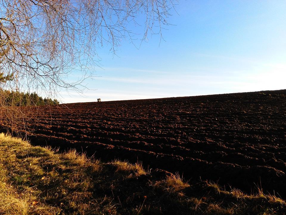 Mood, Evening Light, Field, Nature, Landscape