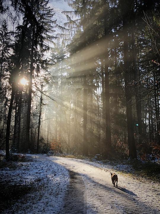 Forest, Backlighting, Nature, Sun, Winter, Rest, Mood