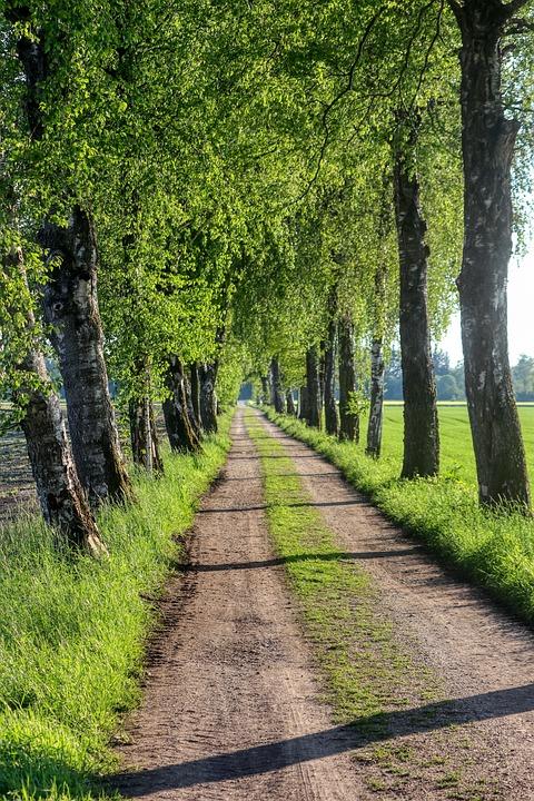 Trees, Away, Nature, Path, Avenue, Landscape, Mood