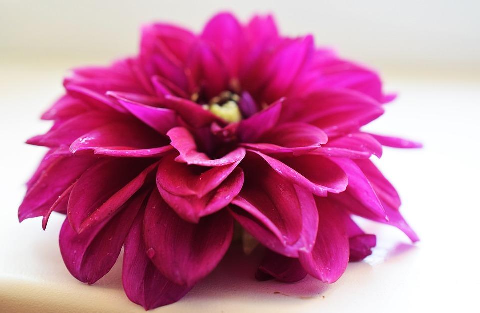 Flower, Purple, Gently, Summer, Mood