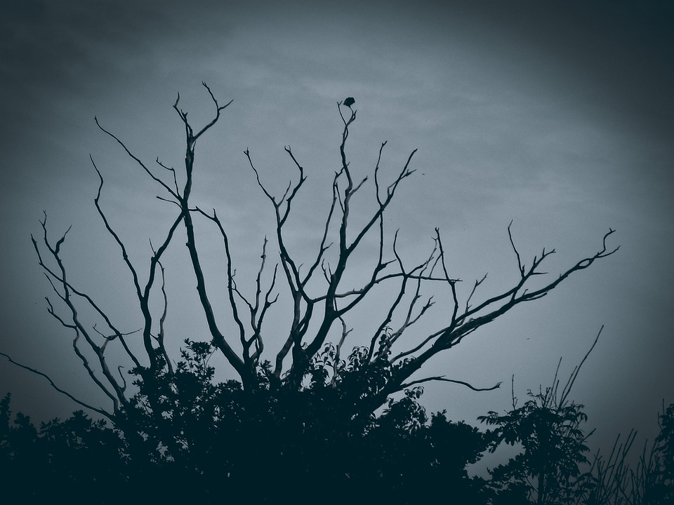 Tree, Gloomy, Mood, Dark, Mystical, Lighting, Landscape