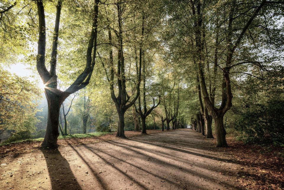 Trees Sunrise, Shadow, Nature, Landscape, Mood, Forest