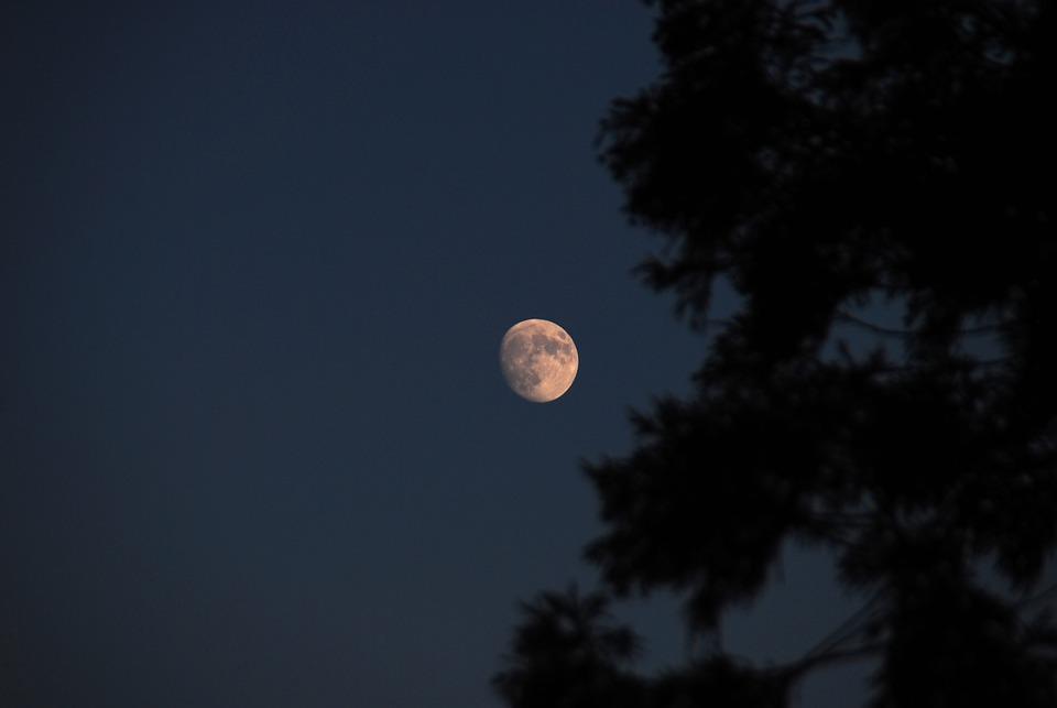 Moon, Sky, Blue, Tree, Nature, Landscape, Trees