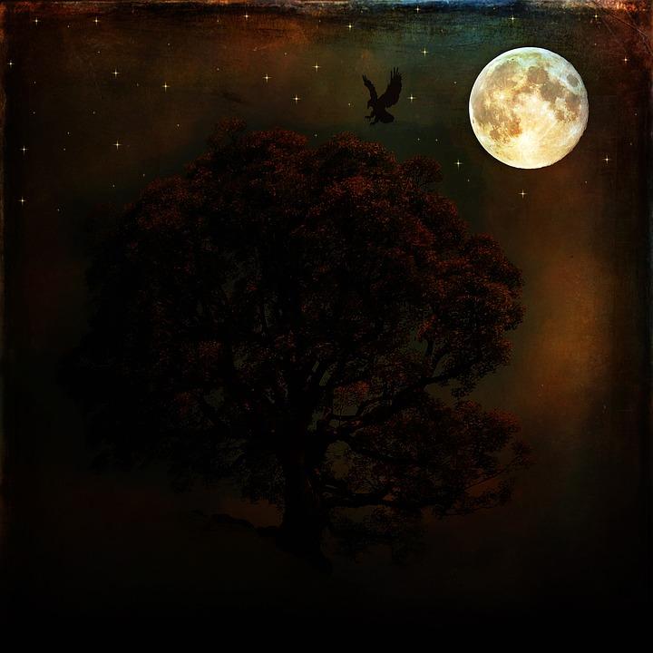 Night, Full Moon, Moon, Dark, Moonlight, Tree, Raven