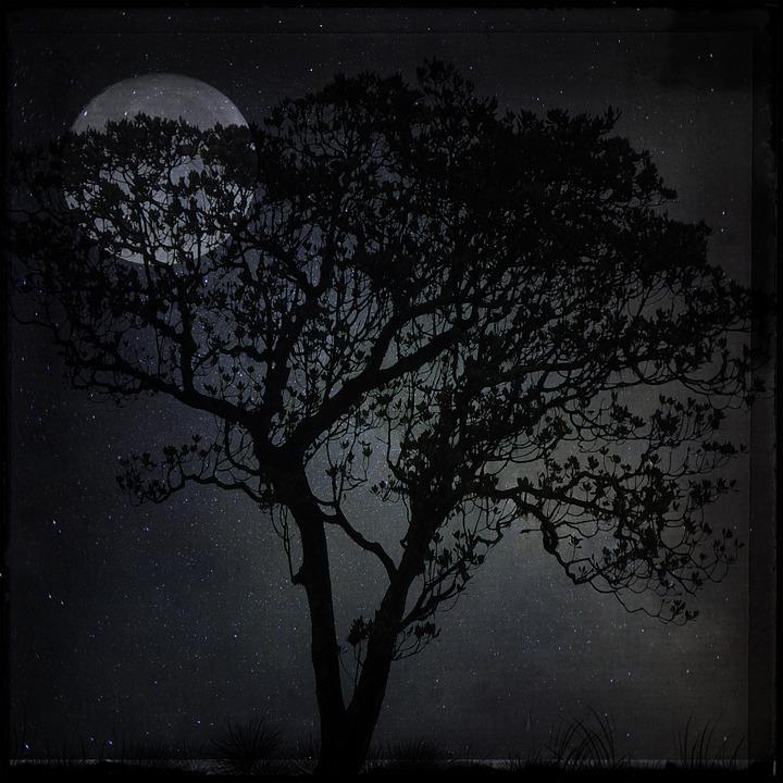 Night, Landscape, Tree, Moon, Dark, Moonlight, Star