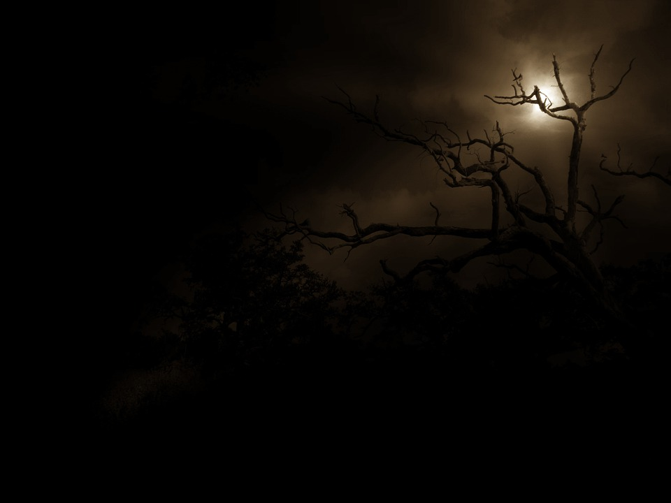 Tree, Night, Moon, Rays, Outline Shadow, Nature
