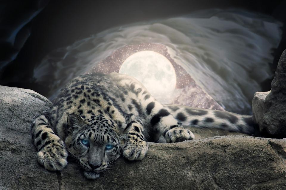 Moon, Snow, Cave, Leopard, Photoshop, Animal