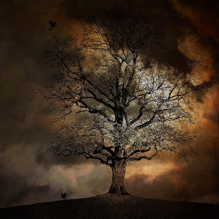 Tree, Landscape, Crow, Moon, Moonlight, Fog, Dark