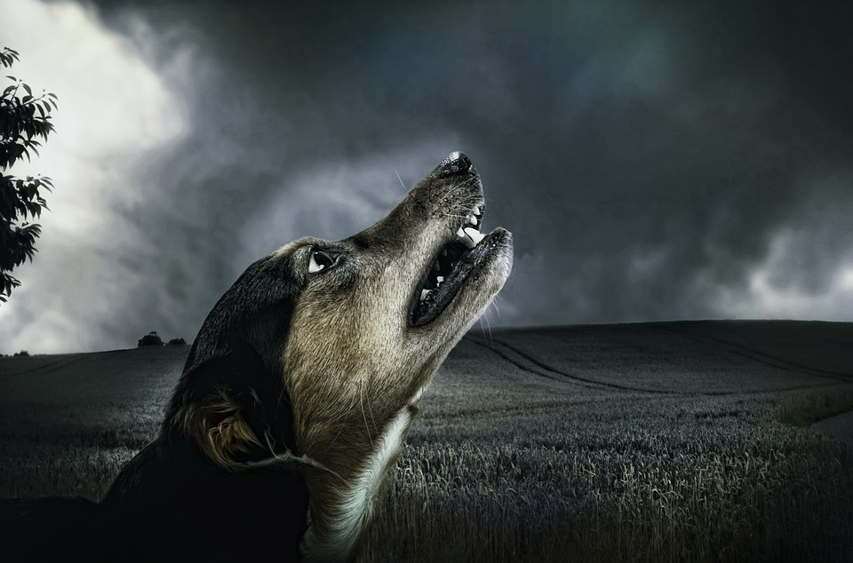 Dog, Dark, Howl, Moonlight, Animal, Fur, Pet