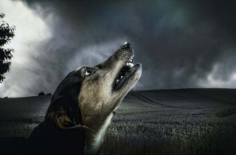 Dog, Dark, Howl, Moonlight, Animal, Fur, Pet